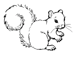 squirrel coloring pages free printable coloring pages