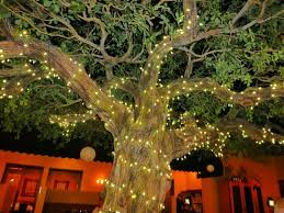 panama city beach christmas lights if you watch closely there are fireflies in the tree not the