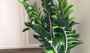 houseplants plant tall indoor house plants marvelous tall house plants names