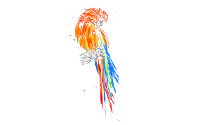 parrot drawings sketchport