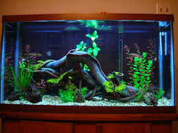 fish tank ideas fish tank setup perth wrx aquariums