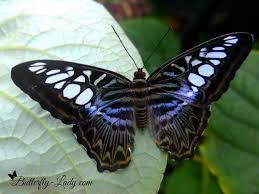 butterflies in winter butterfly