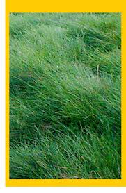 stover seed company turfgrass seeds bermuda grass seeds grass