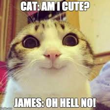 Cute No Meme - smiling cat meme imgflip