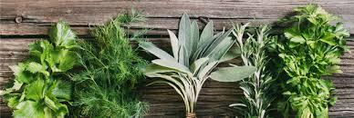 les herbes de cuisine herbes aromatiques des produits vendus à prix d or