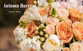 Family Garden Sf San Francisco Florist Flower Delivery By Flowers Of The Valley