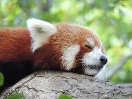 skyenimals an animal blog for kids