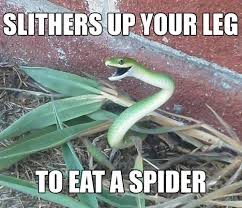 Funny Spider Meme Pictures To - 20 most funny snake pictures and images