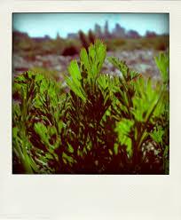 native plants los angeles california native plants u2013 los angeles state historic park