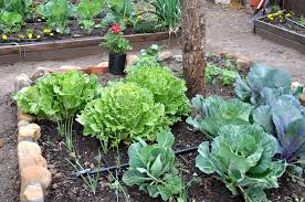 Urban Gardens The35 Most Ideal And Possibility Urban Garden Ideas For Who Do