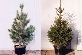 a greener tree inhabitat green design innovation