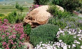 Big Rock Garden High Altitude Gardening The Big Rock Garden