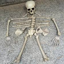 online shop 28pcs broken bone halloween skull skeleton decorations