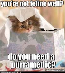 Funny Sick Memes - list of synonyms and antonyms of the word lol cat sick