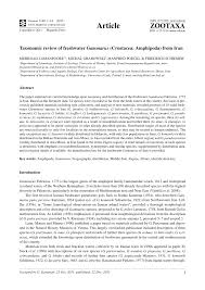 iranische k che two new sympatric species of freshwater gammarus crustacea