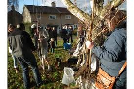 more trees for banes localgiving