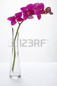 Tall Purple Vase A Purple Orchid Stands Into A Tall Vase Of Glass Filled Half