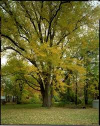 10 best trees for brilliant fall color fact sheet