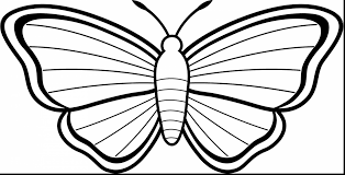 unbelievable beautiful butterfly coloring pages with free
