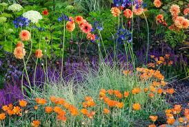 dahlias hydrangea carex ornamental grass arctotis flowers