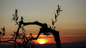 silhouette image of tree and sunset photo free image peakpx