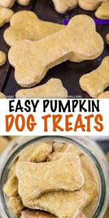 recipe for dog treats pumpkin dog treat recipe spend with pennies