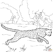 cheetah coloring pages to print cheetah coloring pages free