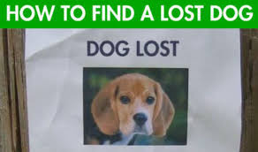 Lost Dog Meme - how to find a lost dog the simple technique every dog owner