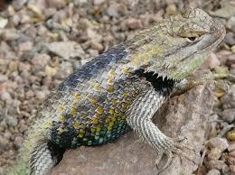 Arizona wildlife images 87 best tucson desert wildlife images tucson jpg