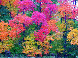 forest autumn trees colored leaves forest wallpaper for home for