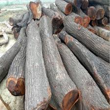 sheesham wood log at rs 2200 square sheesham wood id