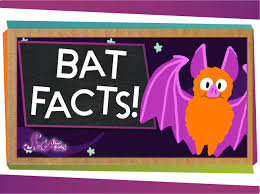 3 facts about bats