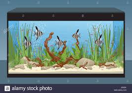 Aquascape Freshwater Aquarium Natural Home Aquarium With Fish And Plants Aquascape Tank Vector