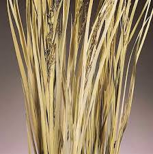 32 best dried grasses images on grasses silk flowers