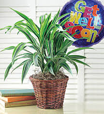 Plant Delivery Same Day Plant Delivery Send Same Day Plants 1800flowers Com