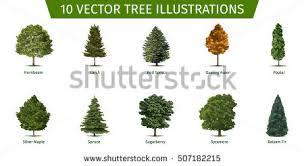 type of acacia leaf vectors download free vector art stock