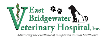 east bridgewater veterinary hospital veterinarian in east