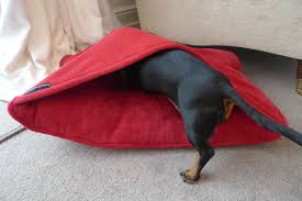 Burrowing Dog Bed The U0027sausage Sandwich U0027 Bed New Colours Simply Spiffing Dachshunds