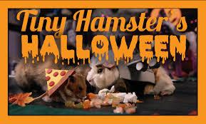 Hamster Halloween Costumes Tiny Hamster U0027s Halloween Ep 10