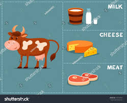 cute cartoon illustration cow products we stock vector 156192545