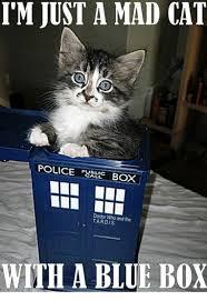 Mad Cat Memes - 25 best memes about mad cat mad cat memes