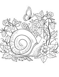 snail coloring free printable coloring pages