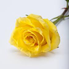 roses online roses martin s specialty store order online online cake deli