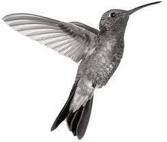hummingbird tattoos designs hummingbird tattoos ideas