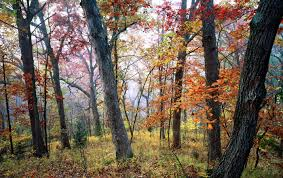 Kansas forest images Ku field station 39 s baldwin woods forest preserve doubles in size jpg