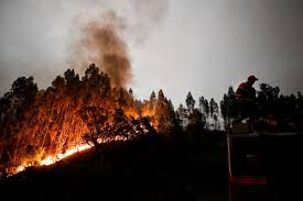Wildfire Wedding Photos by Portugal Wildfire 61 Killed Victims Burned In Cars As They Fled