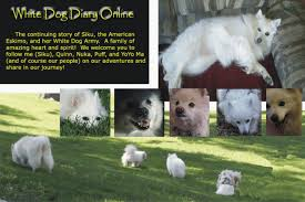 american eskimo dog new mexico puppy up foundation white dog and white dog army countdown to