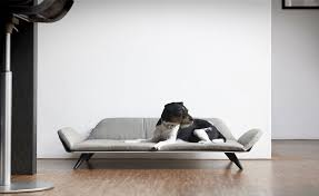 Post Modern Furniture by Post Modern Pet Furniture Day Beds