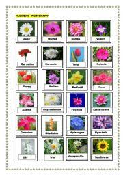 pictures of different flowers and their names roselawnlutheran