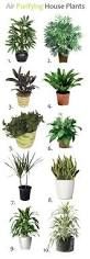 10 Best Houseplants To De by Bodyrock Get In The Best Shape Of Your Life At Home For Free